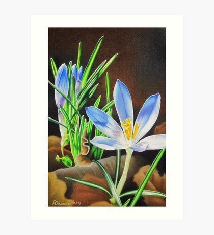 Spring Crocus Art Print
