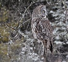 Owl Incognito 3 by Ginny Fobert