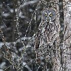 Owl Incognito 1 by Ginny Fobert