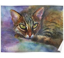 Vibrant Watercolor Bengal cat painting by Svetlana Novikova Poster