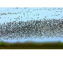 Migration Photographic Print