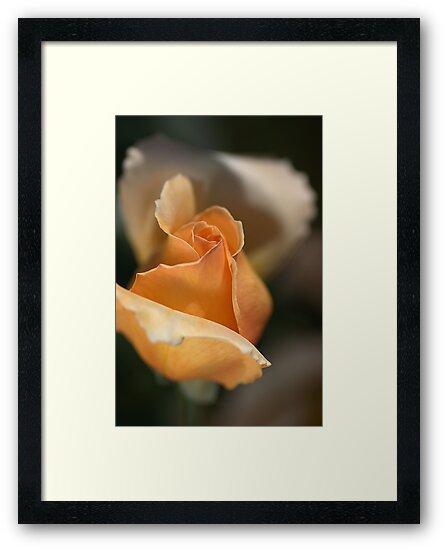 The Rose Bud by Joy Watson