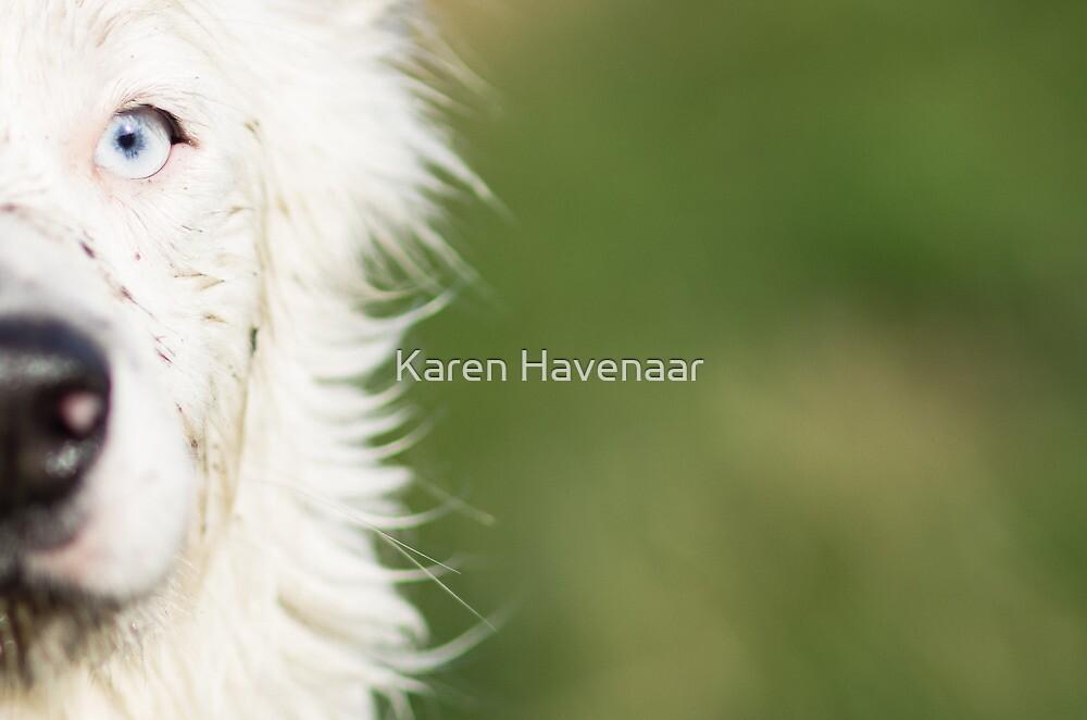 The bright side of Harrie by Karen Havenaar