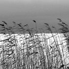 Reeds over white by JuliaPaa