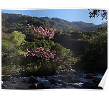 Occidental Sierra Madre  Poster