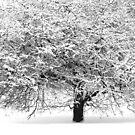 Winter tree by JuliaPaa