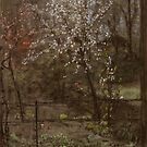 Spring Blossoms by Bridgeman Art Library