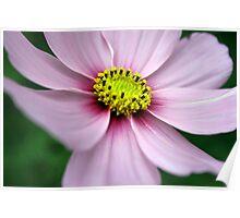 Flower, Pretty Flower Poster
