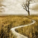 The Lonely Path by Gary Murison