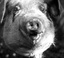 Pig Killer Sticker