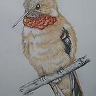 Rufous Hummingbird by KarenJI1962