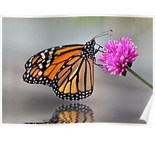 Monarch Butterfly On A Bright Pink Flower Poster