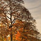 Autumn Light by Great North Views