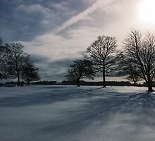 Winter Shadow by Angie Morton
