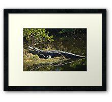 Alligator in the Sun Framed Print