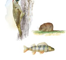 woodpecker, beaver and fish (watercolor) by Alexander Savchenko