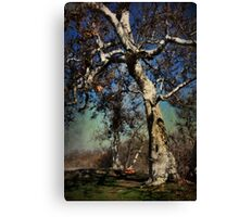 A Day Like This Canvas Print
