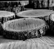 Wood Slices by Edward Fielding