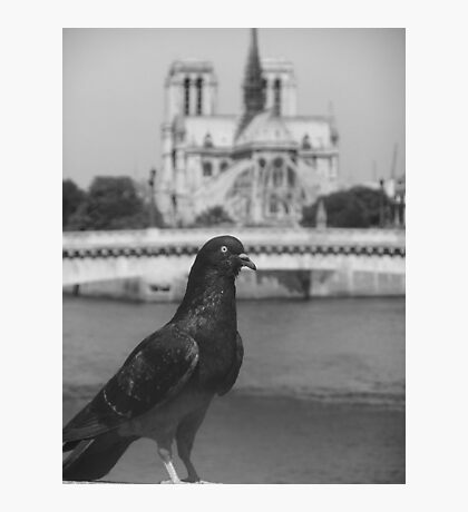 Le Pigeon of Notre Dame Photographic Print