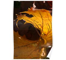 leaves in autumn Poster