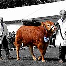 Northumberland Show 2012 by axp7884