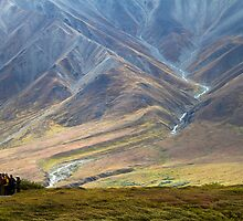 Tourists in Denali by Walter Quirtmair