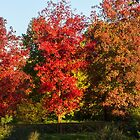 tree in the park in autumn by spetenfia