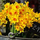 Daffs For Sale by Susie Peek