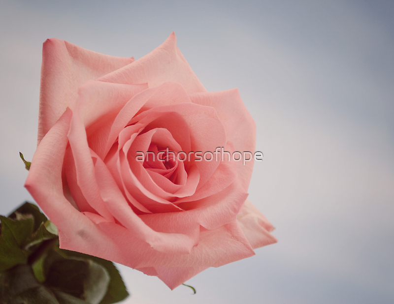 Rose by anchorsofhope