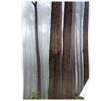 Forest Composition North of Cape Conran Poster