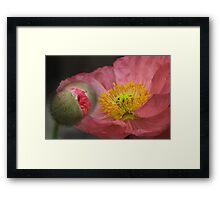 The poppy dream Framed Print