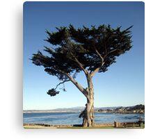 Unique California Tree Print Canvas Print