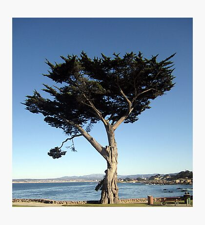 Unique California Tree Print Photographic Print