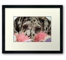 Great Dane Puppy Portrait Framed Print