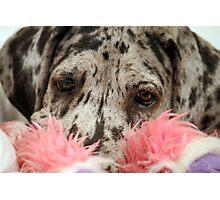 Great Dane Puppy Portrait Photographic Print