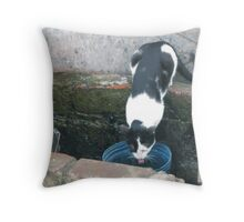 Thristy Cat Throw Pillow
