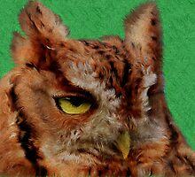 Portrait of an Eastern Screech Owl by NatureGreeting Cards ©ccwri