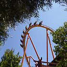 Tatsu Roller Coaster in the Trees by MontagnaMagica