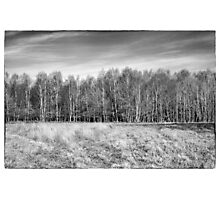 Ashdown Forest Trees in a Row Photographic Print