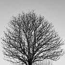 One tree by Ólafur Már Sigurðsson