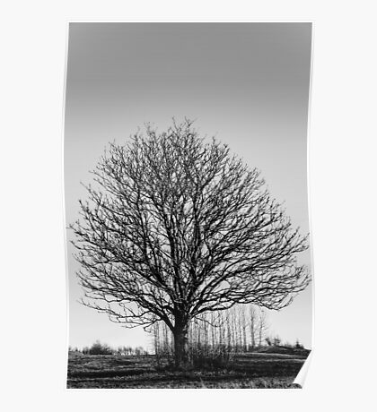 One tree Poster