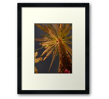 Palm tree. Africa, Egypt, Hurghada Framed Print