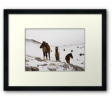 Three Ponies Framed Print