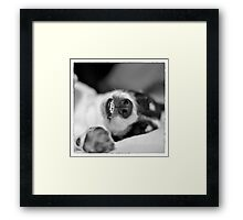 Cute Sleeping Jack Russell Terrier - Black and White Framed Print