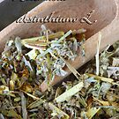 Artemisia absinthium L by SmoothBreeze7