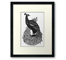 Long Tailed Peacock Framed Print