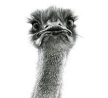 Cute Ostrich sk053 by schukinart