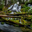 Coldswater Falls Delight by Charles & Patricia   Harkins ~ Picture Oregon