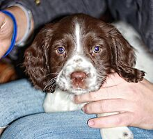 Poppy at 8 Weeks by Paul Morris