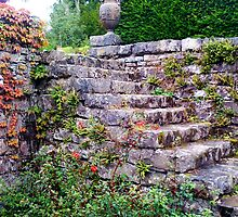 Stone Steps With Virginia Creeper. by LADeville